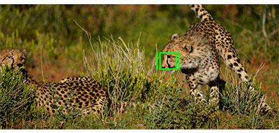 Sony-ILCE7Rm4ab-animal-eye-af-2.jpg