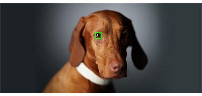 Sony-ILCE7Rm4ab-animal-eye-af.jpg