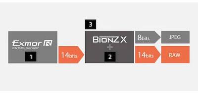 Sony-ILCE7Rm4ab-raw-14-bit.jpg